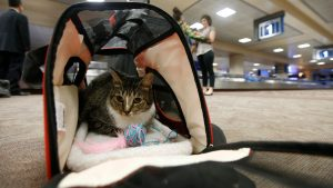 Emotional Support Animals Could Soon Be Banned From Planes